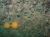 Nautnes efteråret 2013
