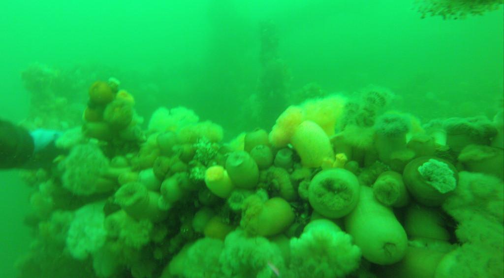 Samsø 2014, video fra dyk på Gudrun